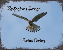 Rovfåglar i Sverige