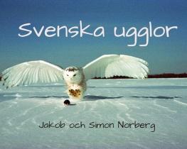 Svenska ugglor
