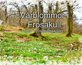 Vårblommor i Frösakull