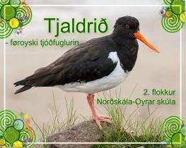 Tjaldrið - føroyski tjóðfuglurin
